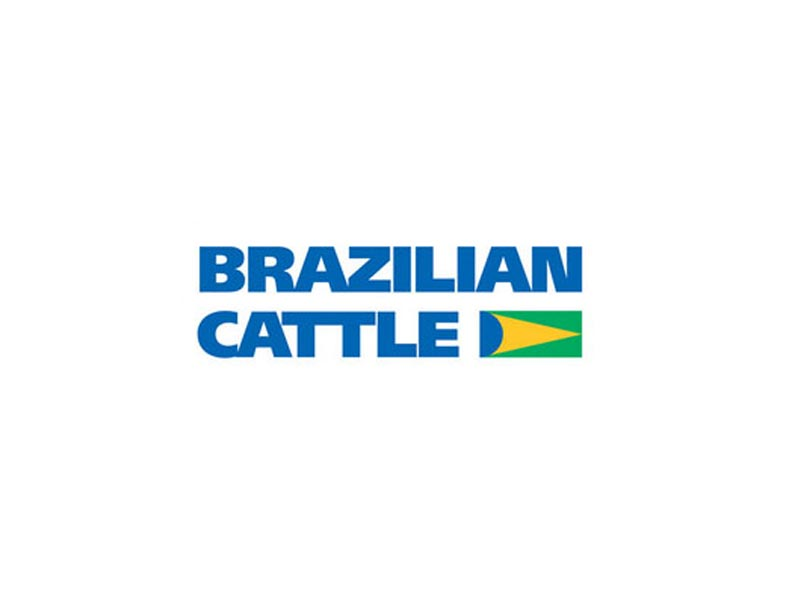 brazillian-cattle